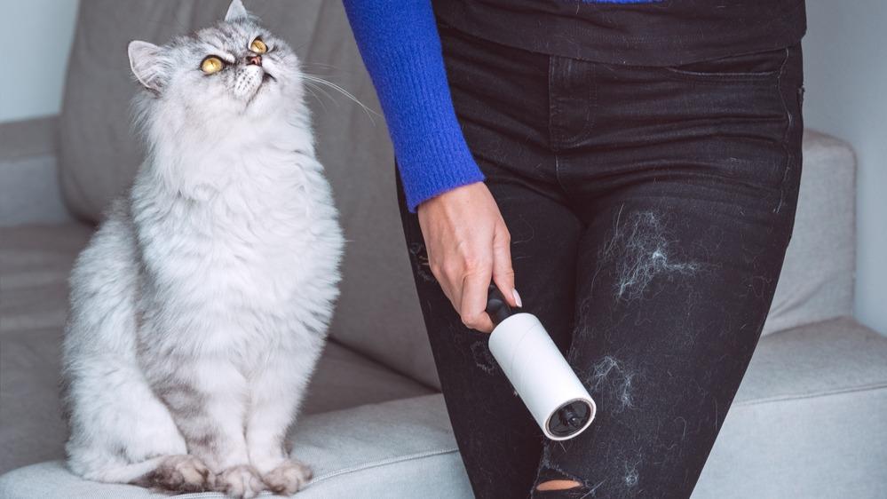 Kočičí chlupy