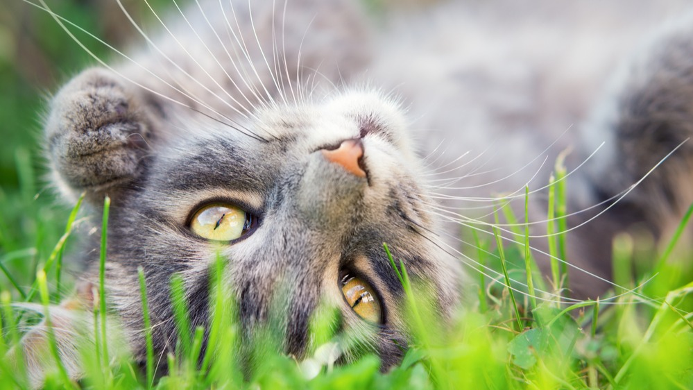 Kočka detail