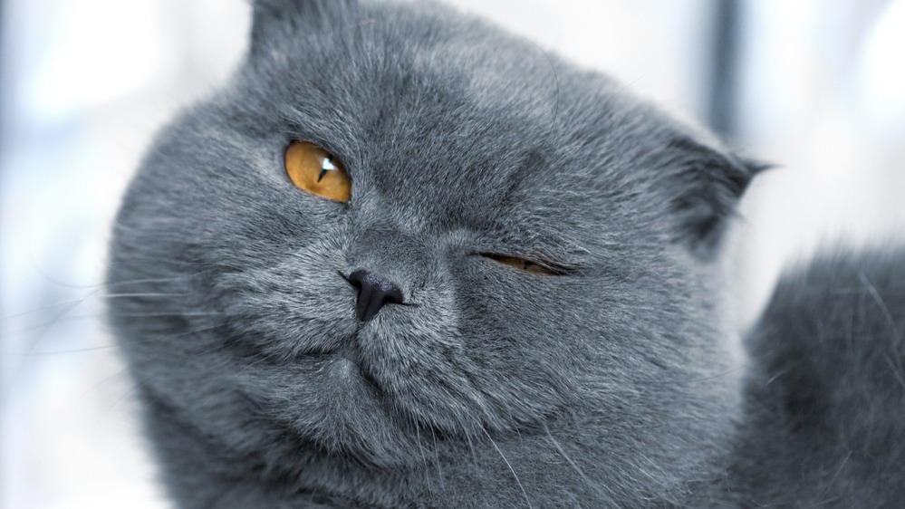 Kočka mrká