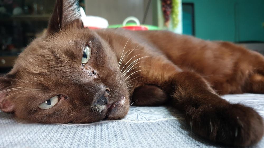 Kočka nemoc