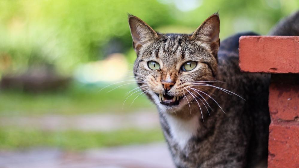 Kočka venku