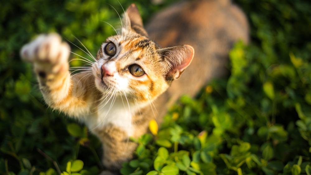Kočka zahrada