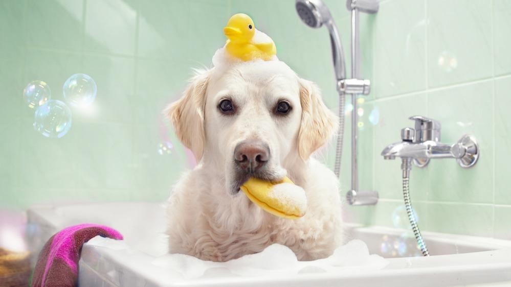 Pes koupel