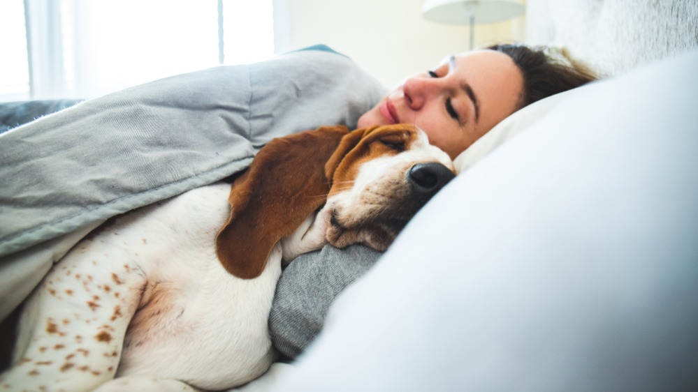 Pes postel