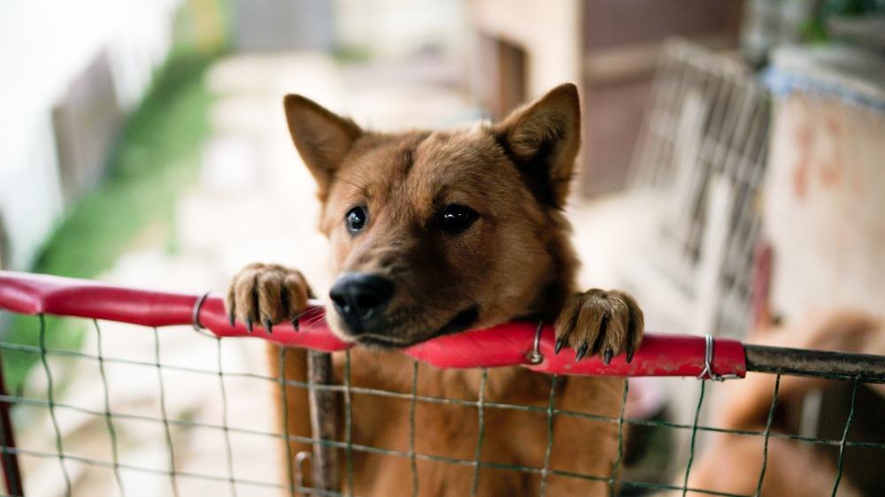 Pes u plotu