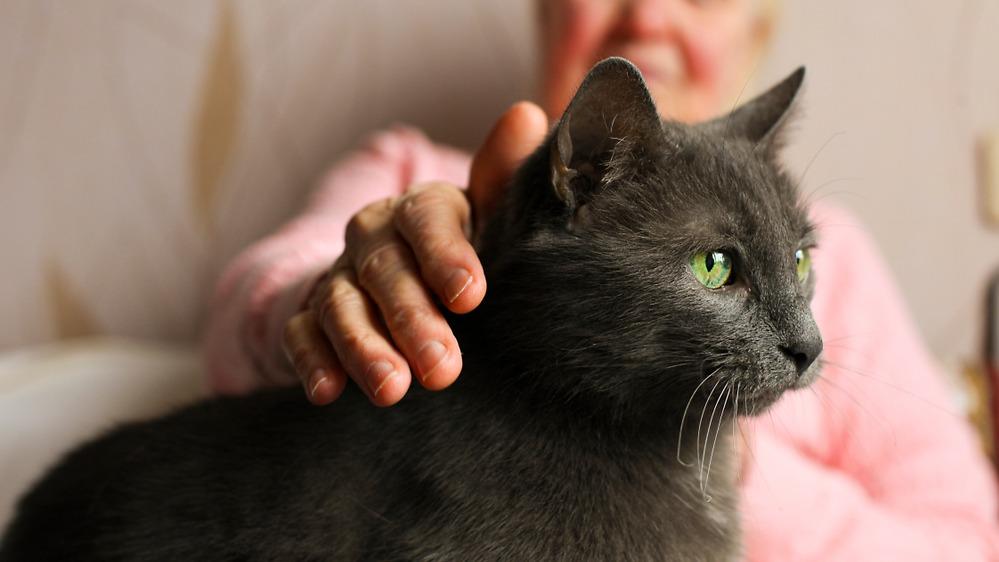 Seniorka s kočkou