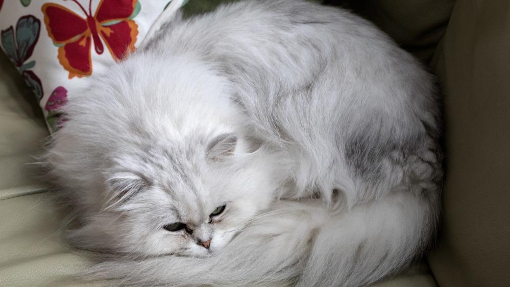 Tiffany kočka